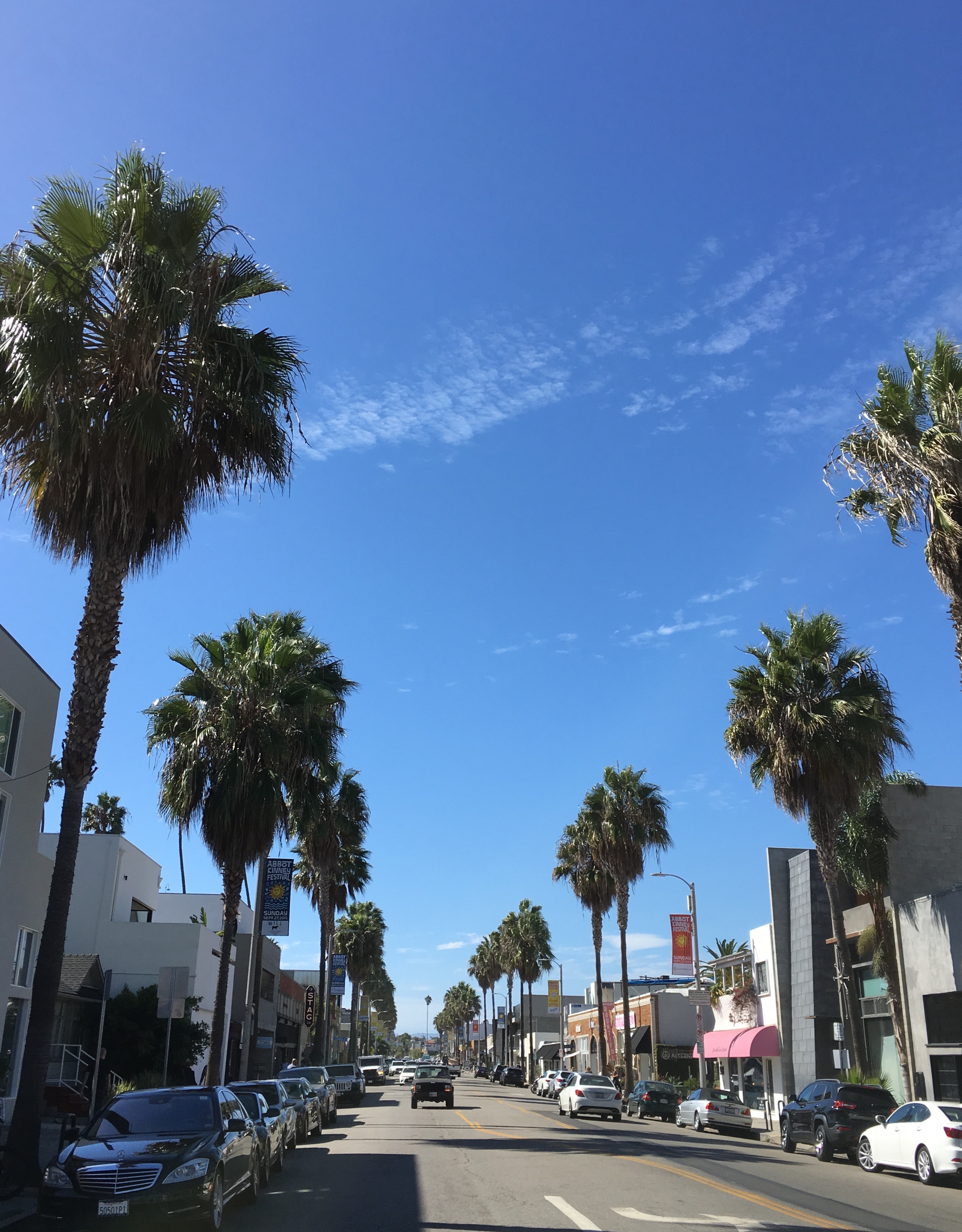 2 abbot kinney palm trees