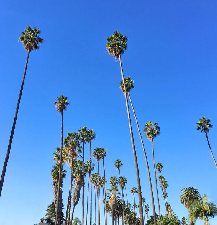 SantaSeli_palmtrees