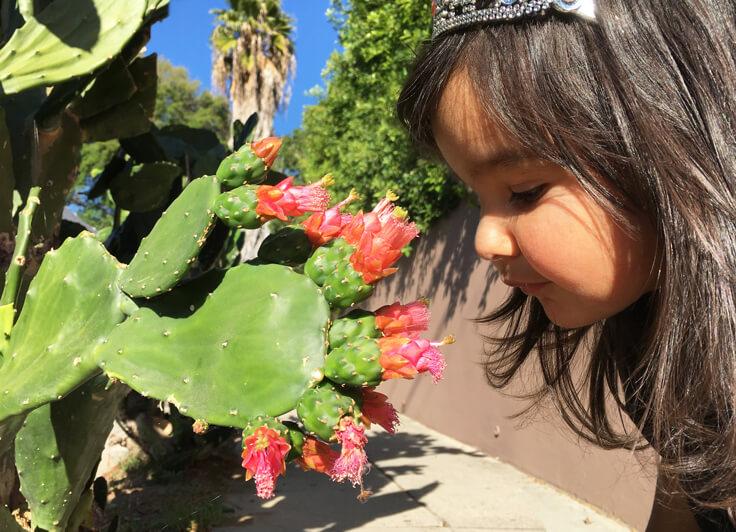 Seli_cactus_W