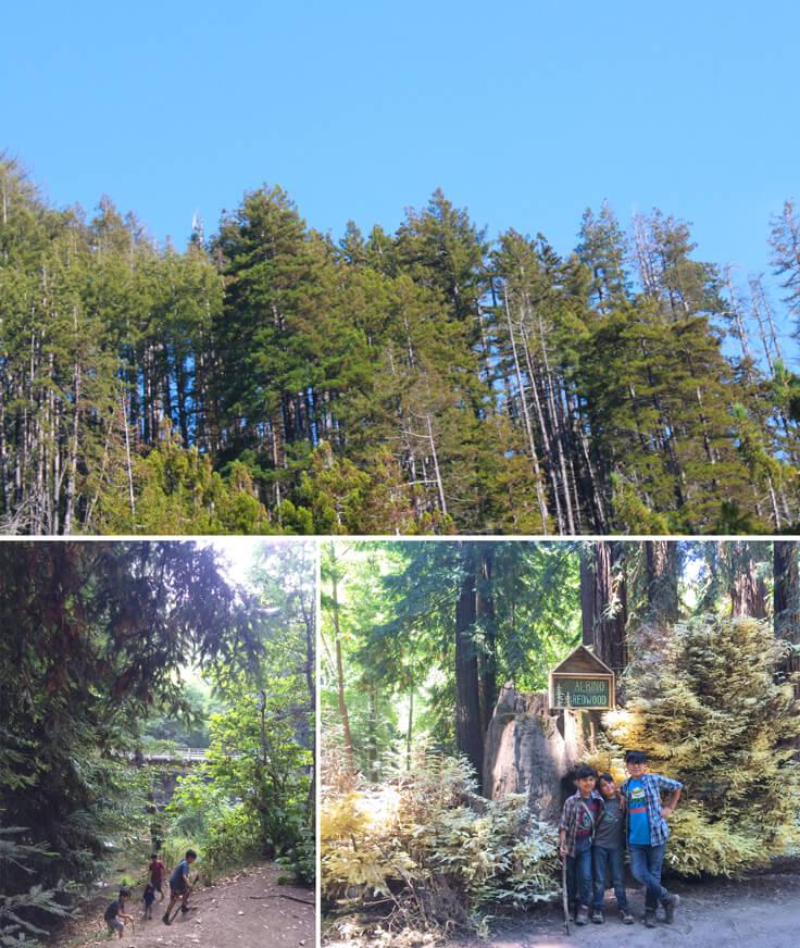 Happy-Camper_trees-n-little-explorers_736